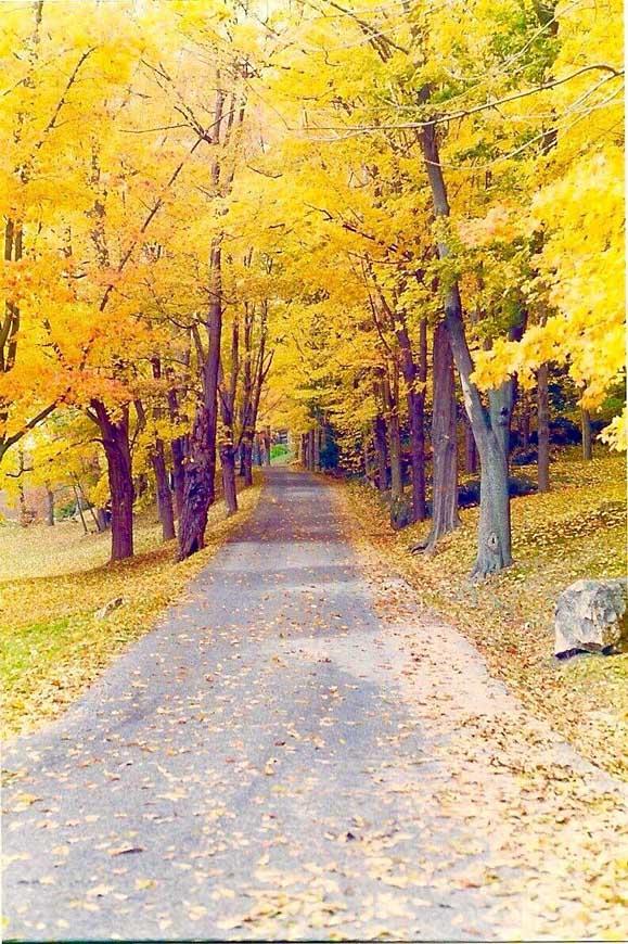 A fall-framed road running through campus